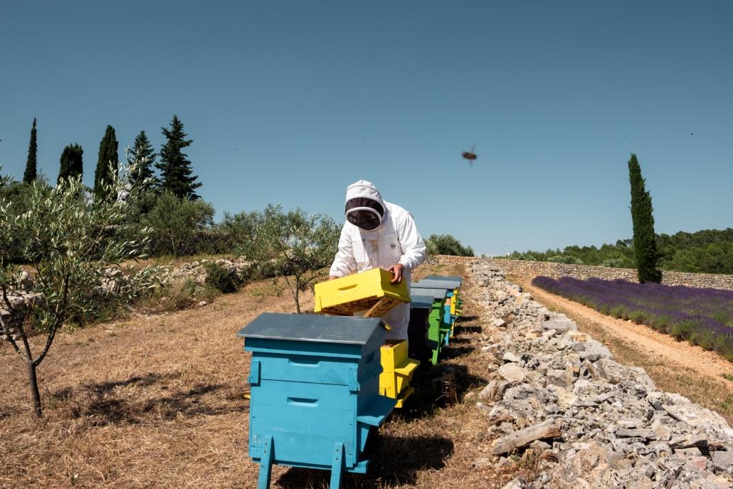 France bleu découvre le travail des apiculteurs
