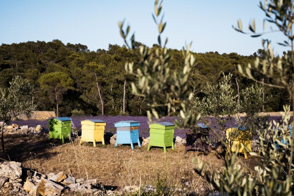 Les ruches dans le domaine La Martinette