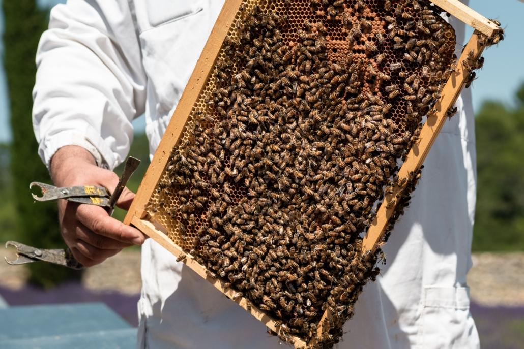apiculteurs récupèrent les cadres