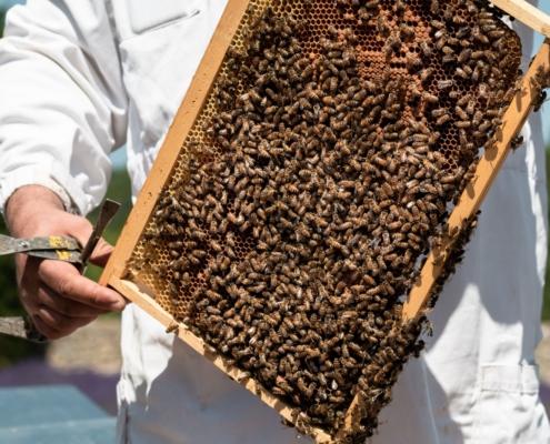 Cadre ruche d