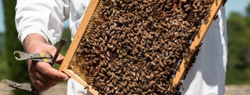 Cadre ruche d'abeilles